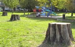 Taglio alberi in Viale Piscicelli