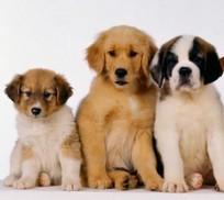 Microchip – Ritiro Certificati iscrizione anagrafe canina